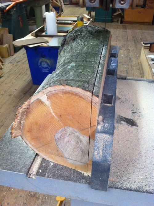 'Milling' willow oak - Part 2