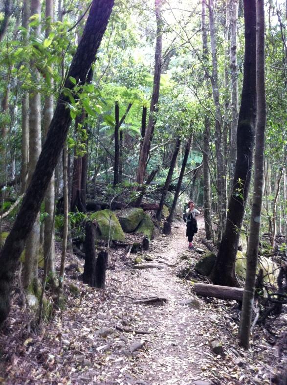 Kerry botanizing in the Coachwood forest